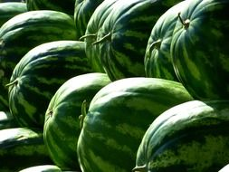 melons water fruit green