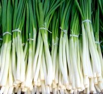 bunches of green onions