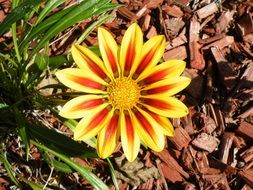 perfect yellow orange garden flower