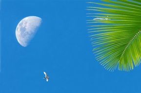 palm tree, moon and bird against the blue sky