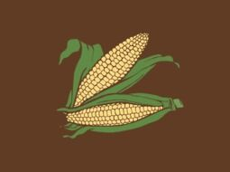 two cobs of sweet corn, maize, drawing