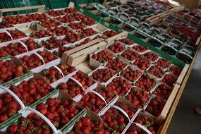 strawberries in boxes on market