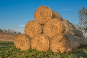 agriculture straw bales