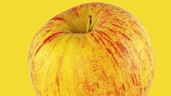 Gala apple on a yellow background
