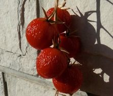 Red tomatoes dried on a sun