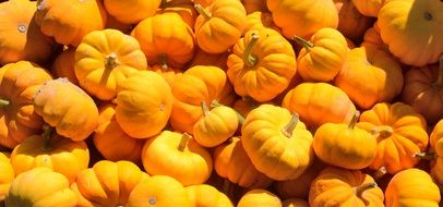 yellow pumpkin on a heap