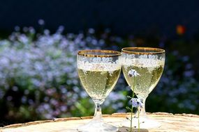 two glasses of champagne in nature