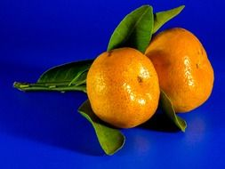 orange mandarin fruit citrus