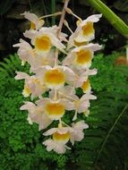 white-yellow orchids on a branch in a botanical garden