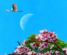 tree branch with pink flowers in blue sky