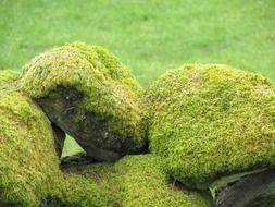green moss on the rocks close-up