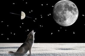 wolf crying for the moon night screne