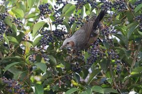 bird branch tree blue fruit