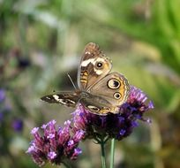 butterfly on wild flower close up