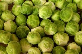 green brussels sprouts vegetables