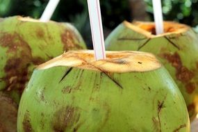 coconut cocktail drink