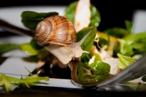 snail and fresh salad