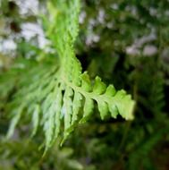 fern leaf bright plant