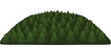 spruce trees on hill, illustration