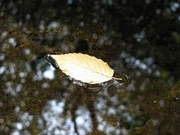 autumn brook leaf