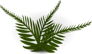 clipart of green fern leaves on a white background