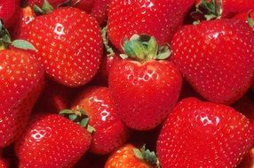 glossy ripe strawberries, background