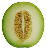 melon in cross section