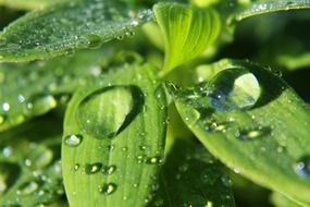 rain drops on grass macro