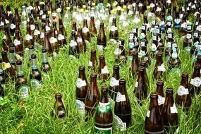 beer bottles drink in the grass
