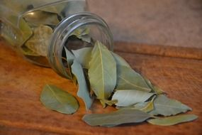 bay leaf in a transparent jar