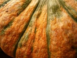 big orange-green pumpkin