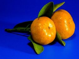 orange mandarin fruit