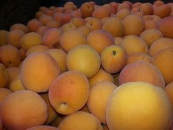 a lot of apricots