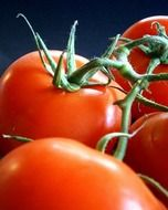 healthy red tomatoes vegetables