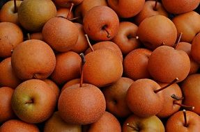 asian pears fruit