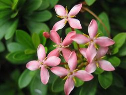 pink small flowers with green leaves