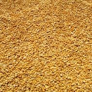golden corn grains