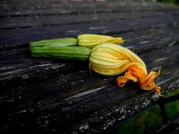 blossom orange zucchini flower