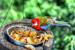 multi-colored parrot on a feeding trough