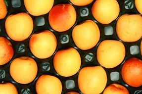 Harvested apricot fruits