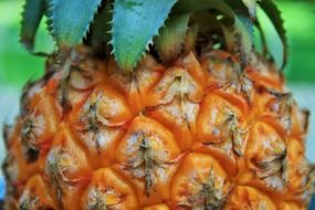 tropical healthy pineapple fruit