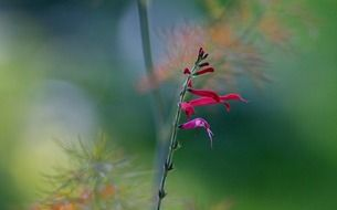 wildflower on a blurred background