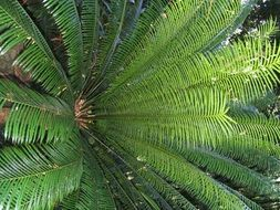 fern plant branches