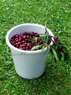 white bucket with cherry
