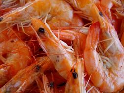 boiled shrimp in a plate