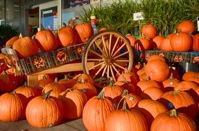 pumpkins orange fruits wagon