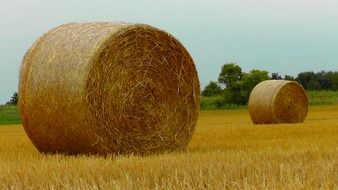 round stack of dry hay