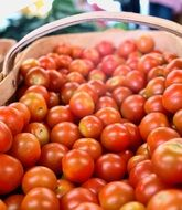 harvest of red ripe tomatoes