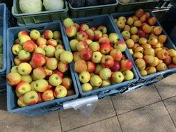 yellow red apples in blue boxes on the market