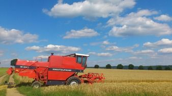 red combine harvester on the wheat field